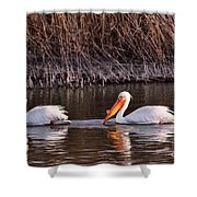 To Pelicans Trolling For Fish Shower Curtain