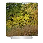 Tossed Salad Shower Curtain