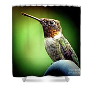 Totem Animal Book Hummingbird Shower Curtain
