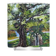 Tree At Cartecay Shower Curtain