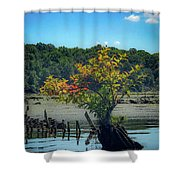 Tree In Mallows Bay Shower Curtain