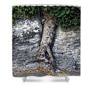 Tree In Stone Shower Curtain
