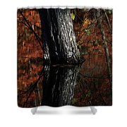 Tree Reflects In The Pond Shower Curtain