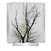 Tree Series Five Shower Curtain