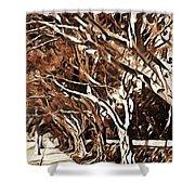 Treelined Shower Curtain by Jody Lane