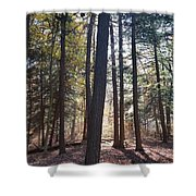 Trees And Shadows  Shower Curtain