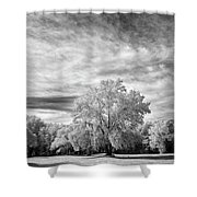 Trees In Florida Shower Curtain
