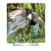 Tricolored Heron With Ruffled Feathers Shower Curtain