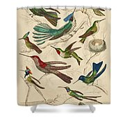 Trochilus - Hummingbirds Shower Curtain