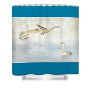 Trumpeter Swans - Don't Land On Me Shower Curtain