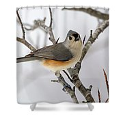 Tufted Titmouse Winter Tranquility Shower Curtain