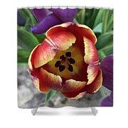 Tulip Beauty Shower Curtain