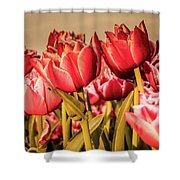 Tulip Fields Shower Curtain by Anjo Ten Kate