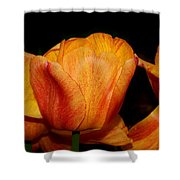 Tulips On A Black Background Shower Curtain