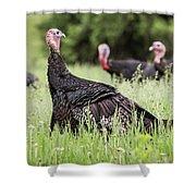 Turkey Flock Shower Curtain