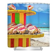 Turks And Caicos Conchs On A Spool Shower Curtain