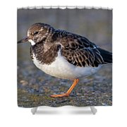 Turnstone Shower Curtain