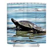 Turtles - Mother And Child Shower Curtain