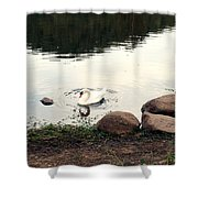 Twilight Swan Shower Curtain