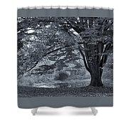 Twin Lake Mist Shower Curtain