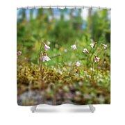 Twinflower Forest Shower Curtain