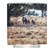 Two For One Shower Curtain by Belinda Greb
