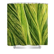 Variegated Shell Ginger Shower Curtain
