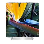 Vibrant Bird Of Paradise #2 Shower Curtain