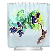 Vine And Branch Shower Curtain