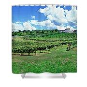 Vineyard, Whangarei, Northland, New Shower Curtain