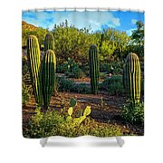 Vislumbre De Sonoran H1833 Shower Curtain by Mark Myhaver