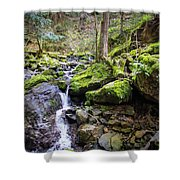 Vivid Green In The Black Forest Shower Curtain