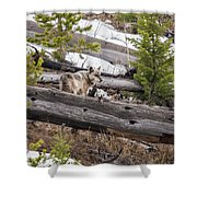 w75 Shower Curtain by Joshua Able's Wildlife
