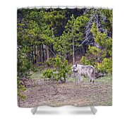 W755 Shower Curtain by Joshua Able's Wildlife