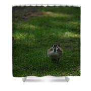 Waddling Ducklings Shower Curtain