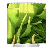 Waiting To Bloom Shower Curtain
