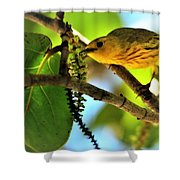 Warbler's Delight Shower Curtain