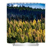 Washington - Gifford Pinchot National Forest Shower Curtain
