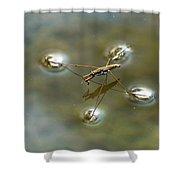 Water Bug Shower Curtain