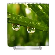 Water Drops On Wheat Leafs Shower Curtain