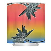 Water Lily Duo Two Shower Curtain