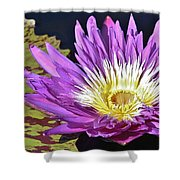 Water Lily On The Pond Shower Curtain