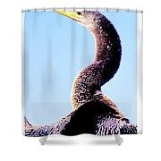 Water Turkey, Anhinga, Animal Portrait Shower Curtain