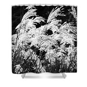 Weed Grass Black And White Shower Curtain