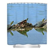 Western Painted Turtles Shower Curtain