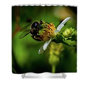 Western Sand Wasp Shower Curtain