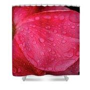 Wet Rose Petal Shower Curtain