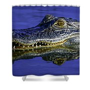 Wetlands Gator Close-up Shower Curtain by Tom Claud