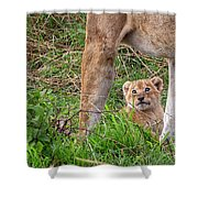 What Could Be Cuter Than A Baby Lion Cub? Shower Curtain