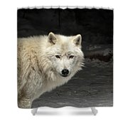 What's For Dinner? Shower Curtain by Susan Rissi Tregoning